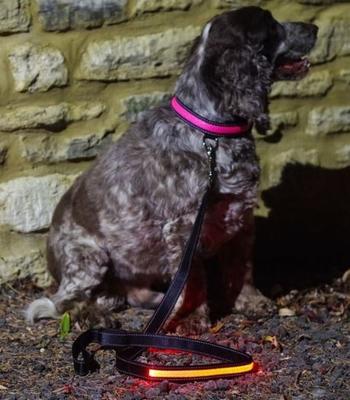 Hondenriem - Roze