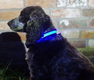 Hondenhalsband - S/M - 31-41cm - Blauw