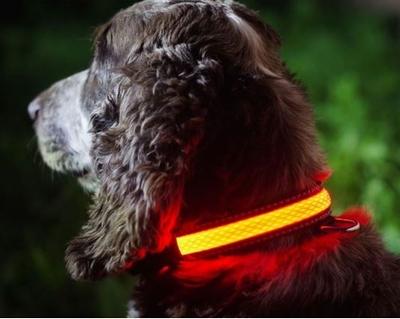 Hondenhalsband - S/M - 31-41cm - Roze