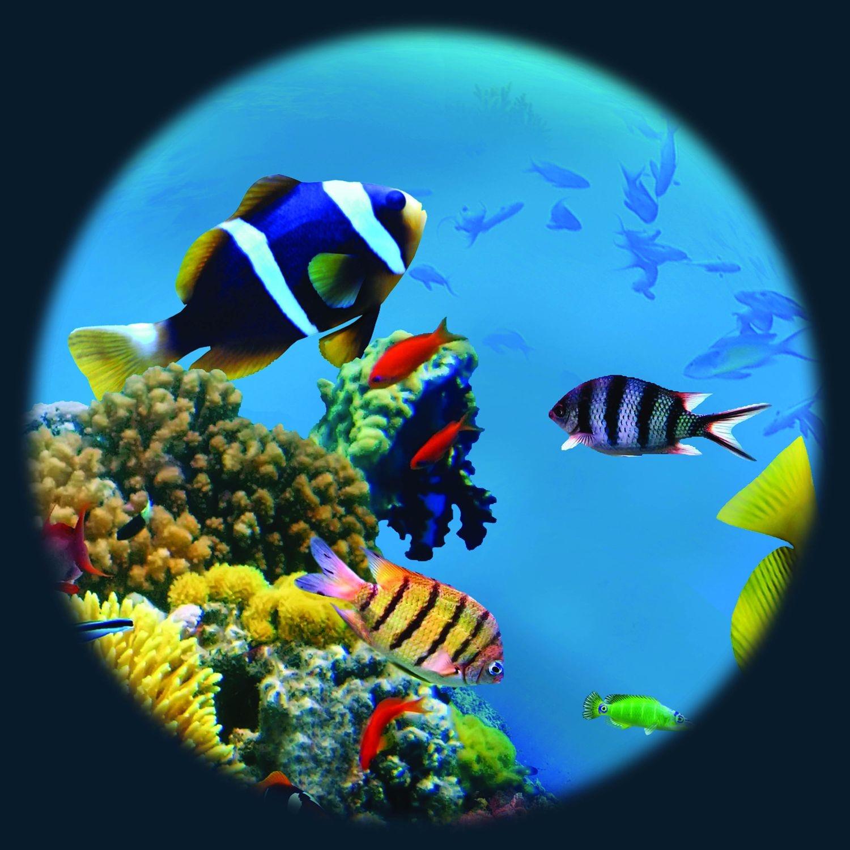 Magnetisch Effectwiel Tropische Vissen