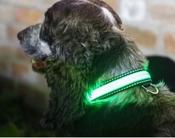 Hondenhalsband - S/M - 31-41cm - Groen